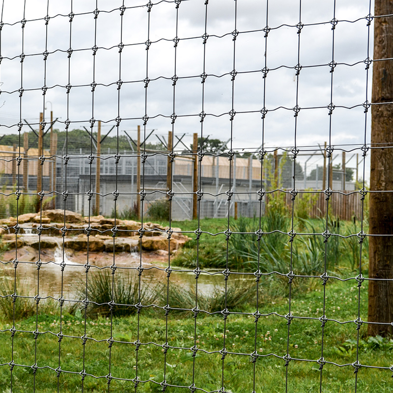 Wire fenced zoo enclosure
