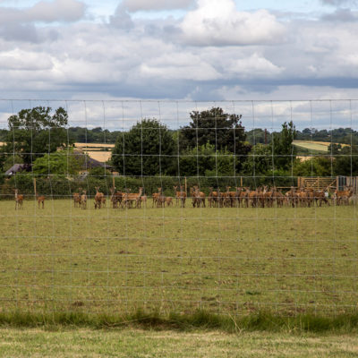 Deer_fencing_gallery_3
