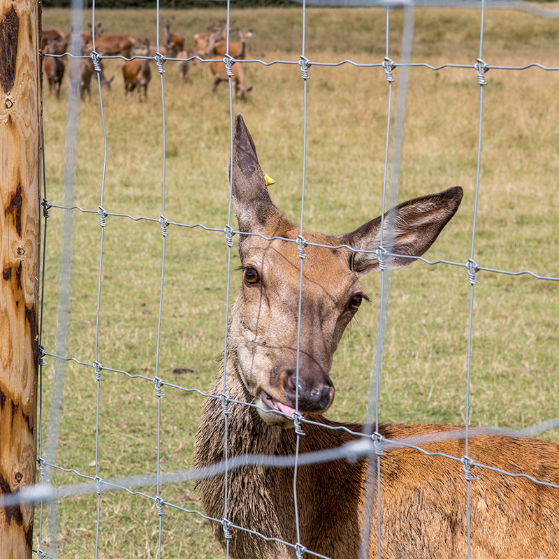 Deer_fencing_gallery_4