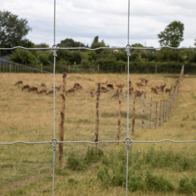 Deer_fencing_gallery_6
