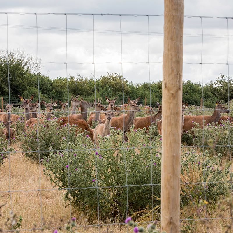 Deer_fencing_gallery_7