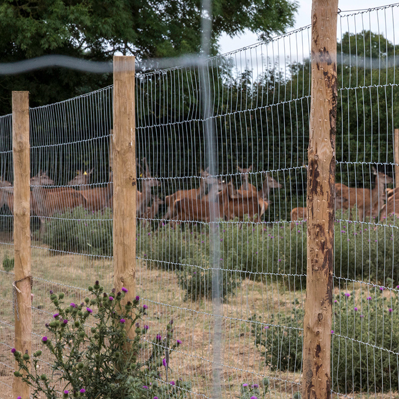 Deer_fencing_gallery_8