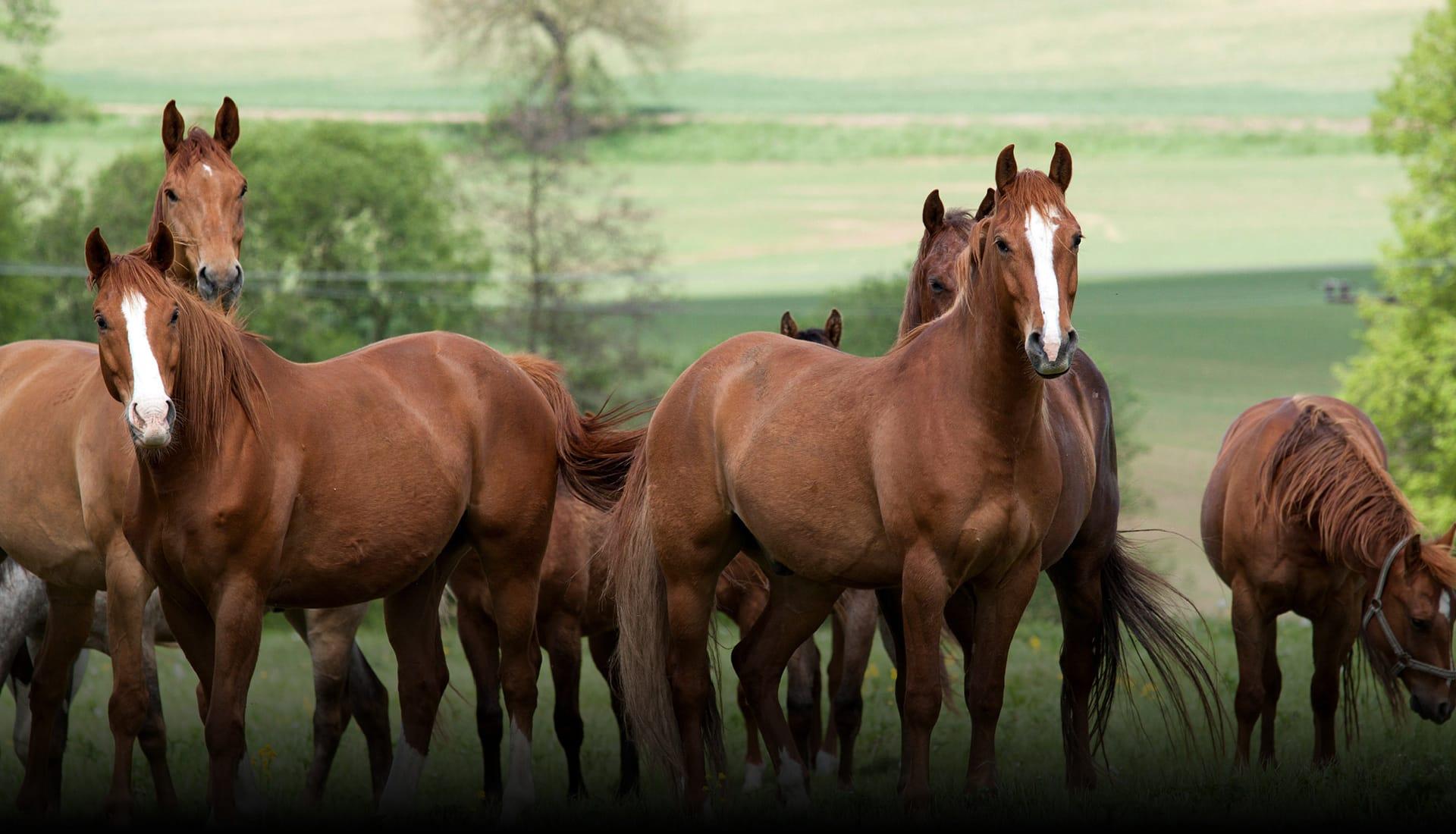 Horse_Fencing_Slider_v4