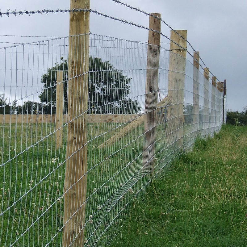 Poultry_fencing_gallery_4