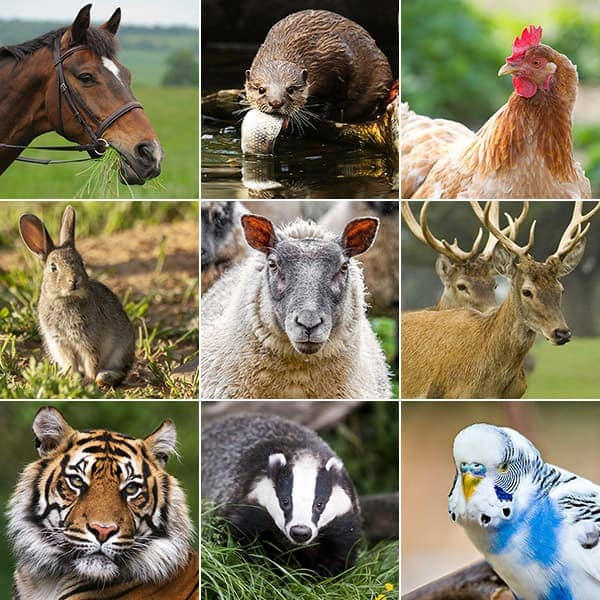 Home_page_animals_box