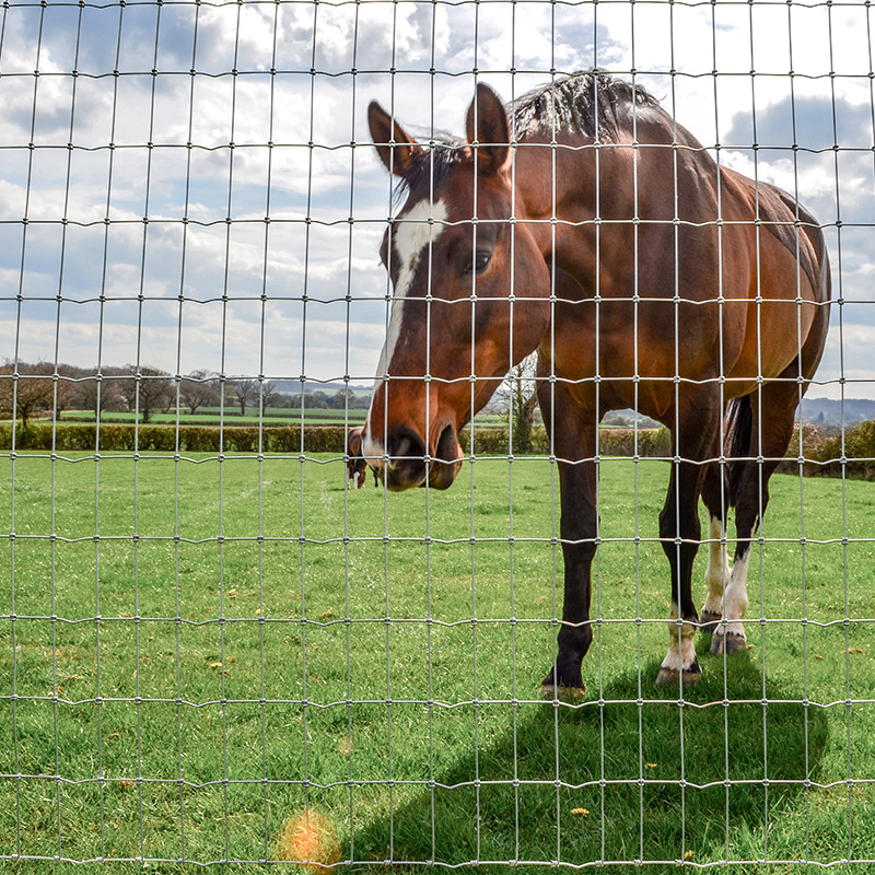 horse behind wire fence