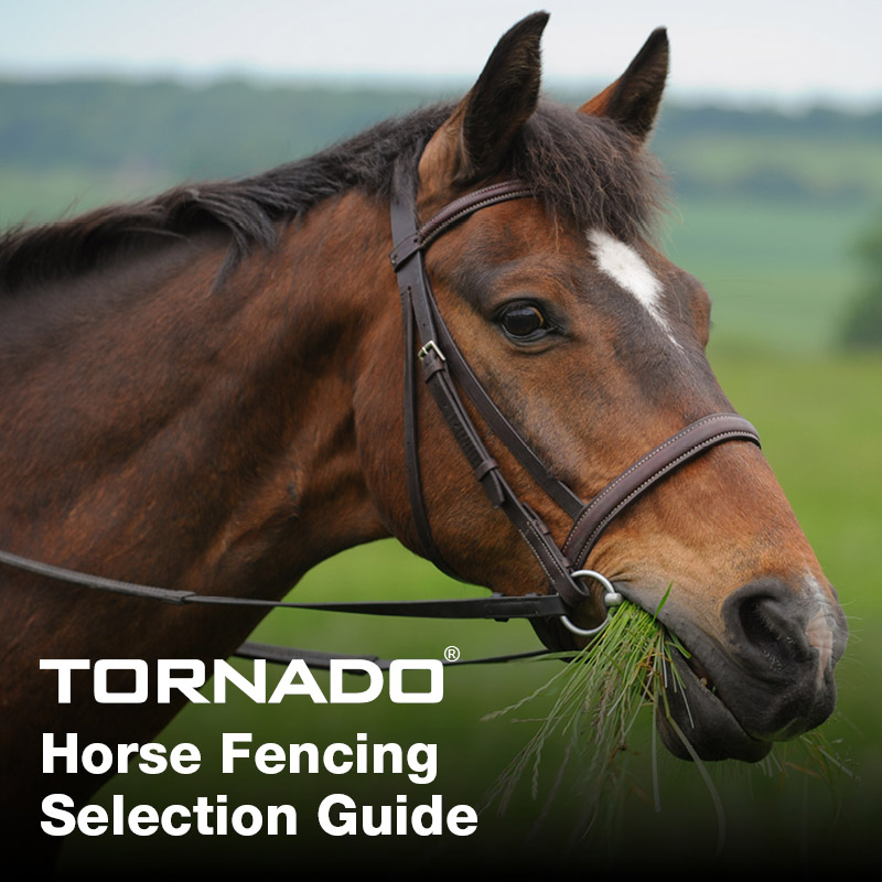 Horse_selection_guide_main