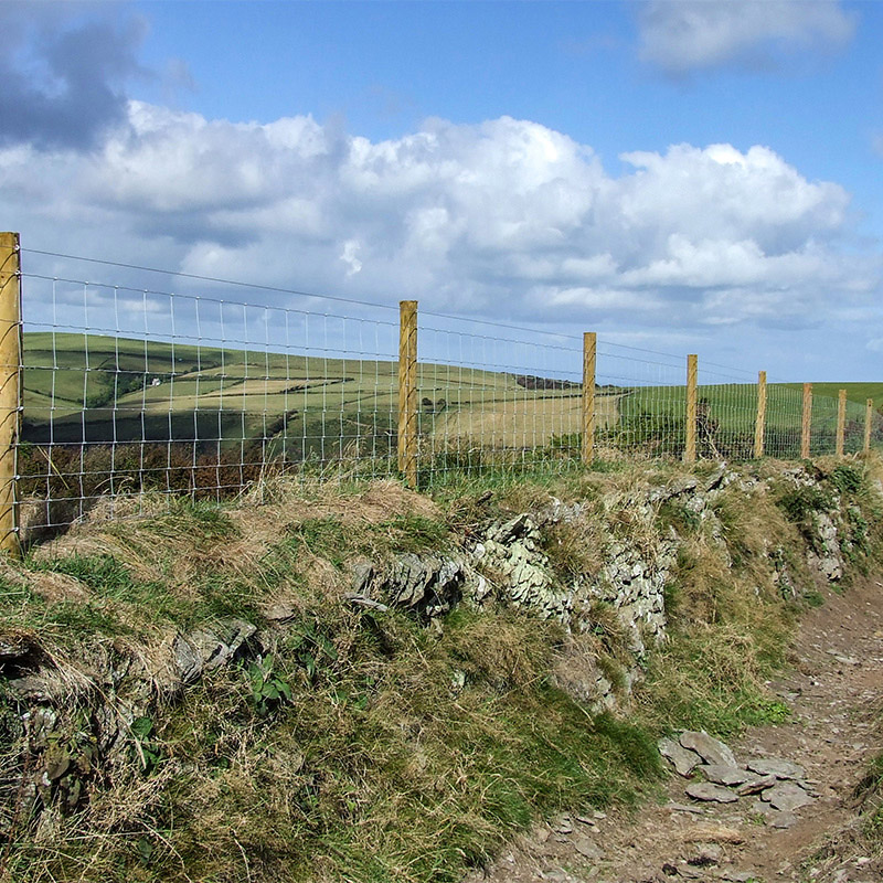 sheep fencing