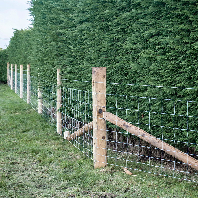 livestock fencing in front of trees