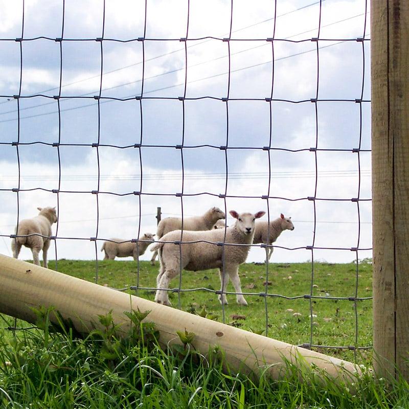 Livestock_fencing_gallery_7