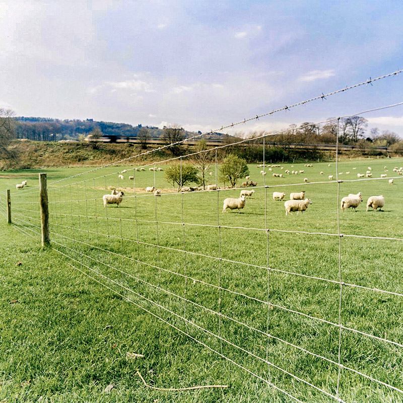 sheep field fenced with wire fencing and barbed wire