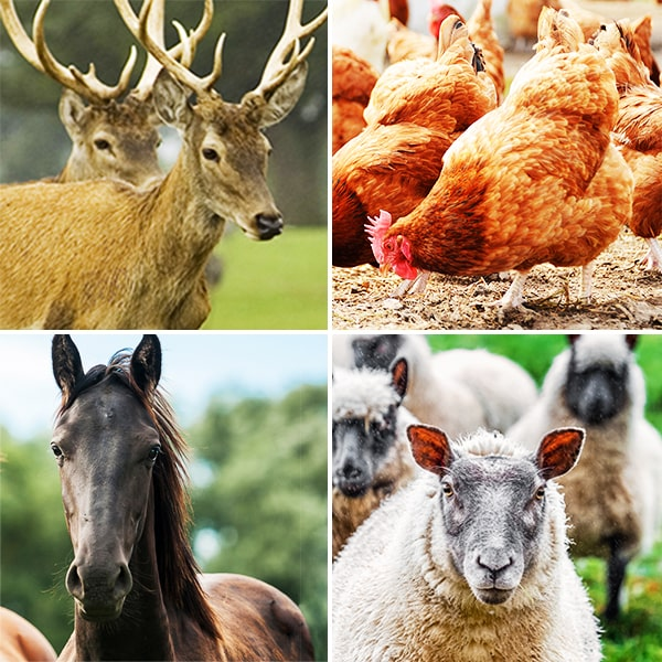 Grid of deer, poultry, horse and sheep photos