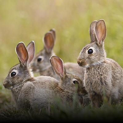 Rabbit_Fencing_small