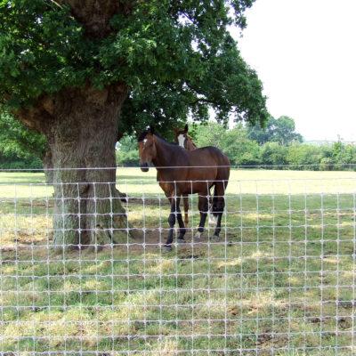 Tornado premium horse fence (31)