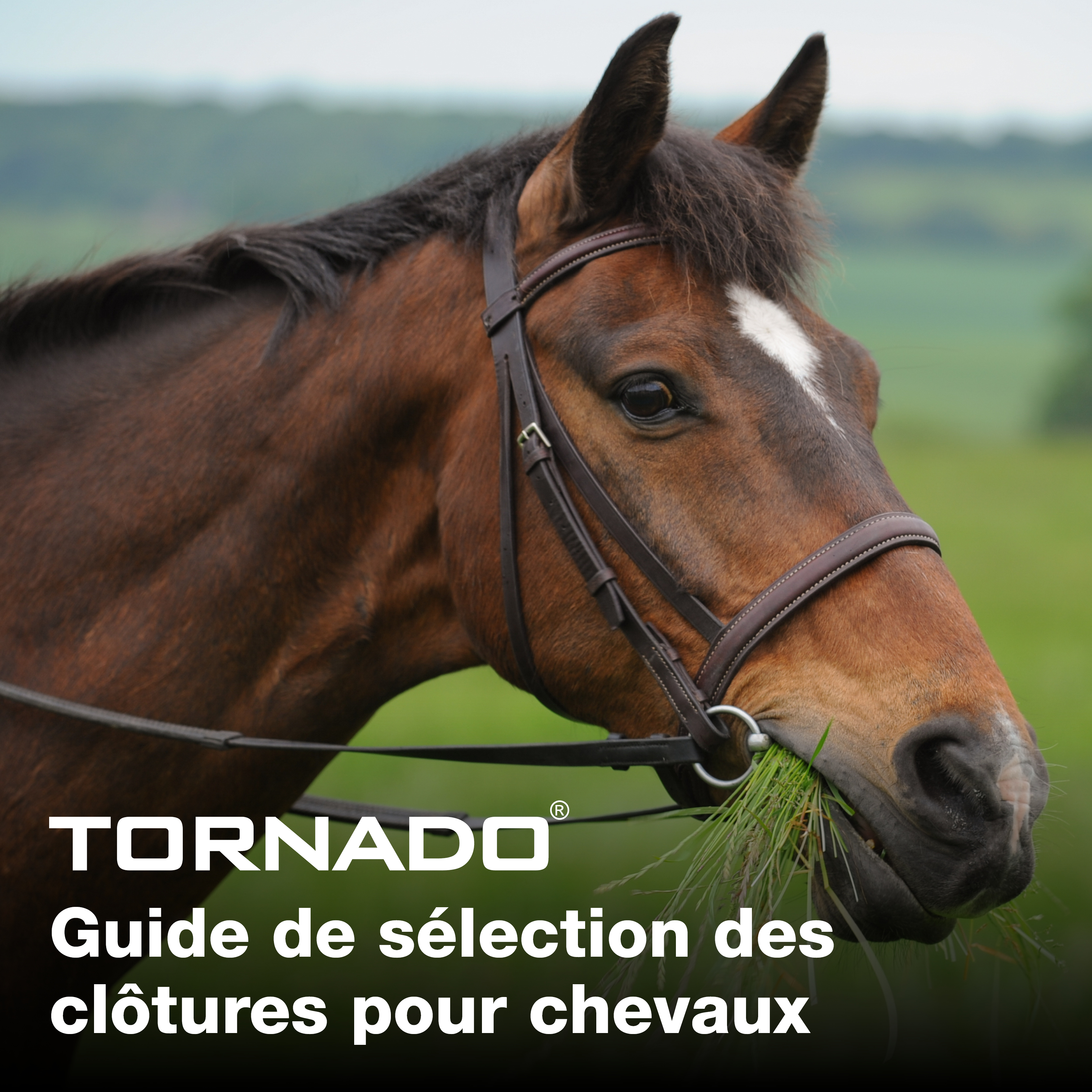 FRENCH Horse_selection_guide_main