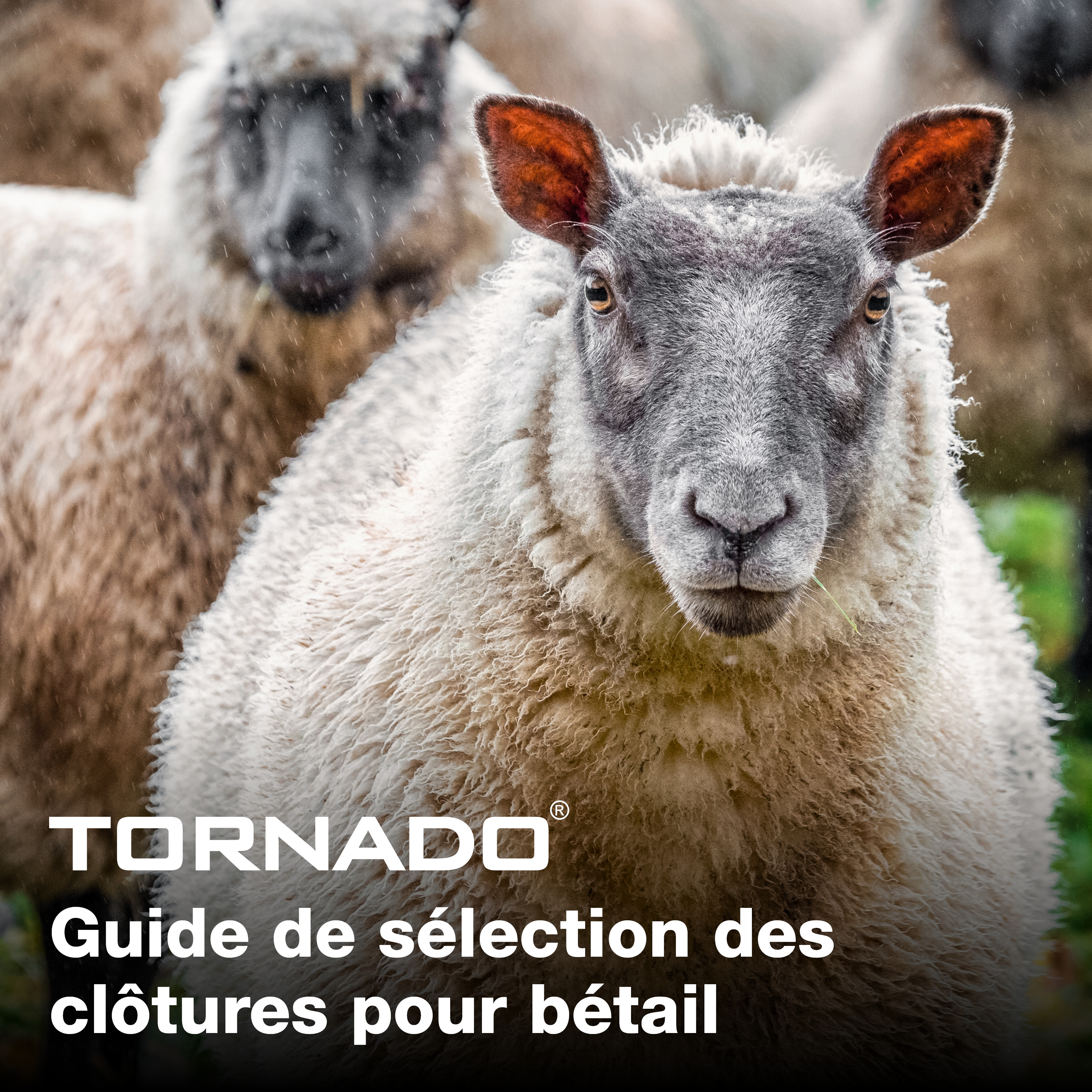 FRENCH Livestock_selection_guide_main
