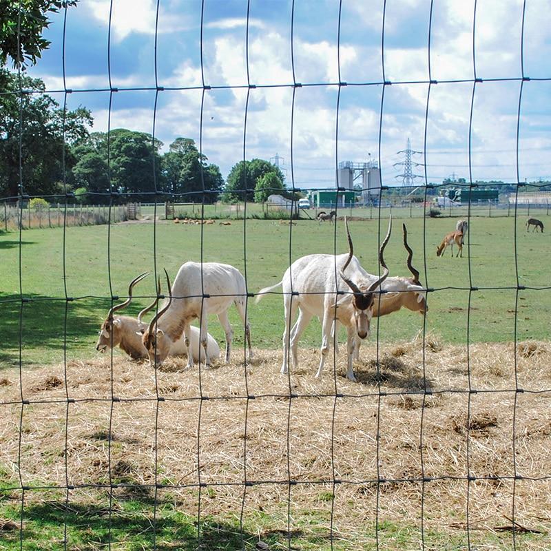animal park fencing