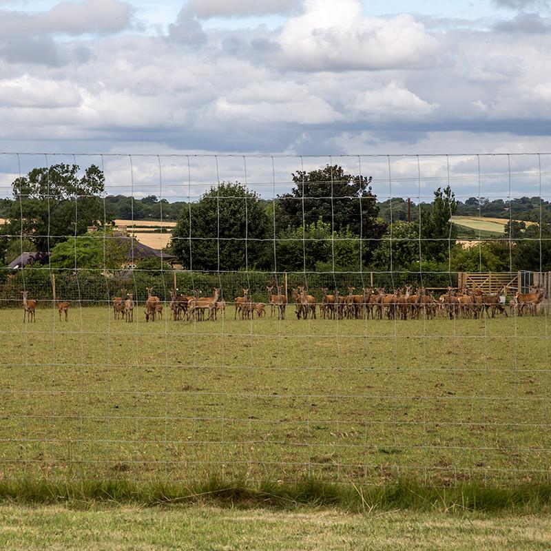 Deer_fencing_gallery_3