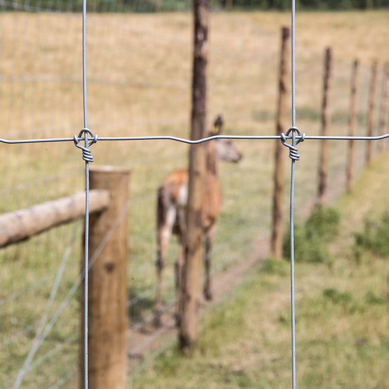 Deer_fencing_gallery_5