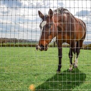 Horse behind Tornado Torus fence