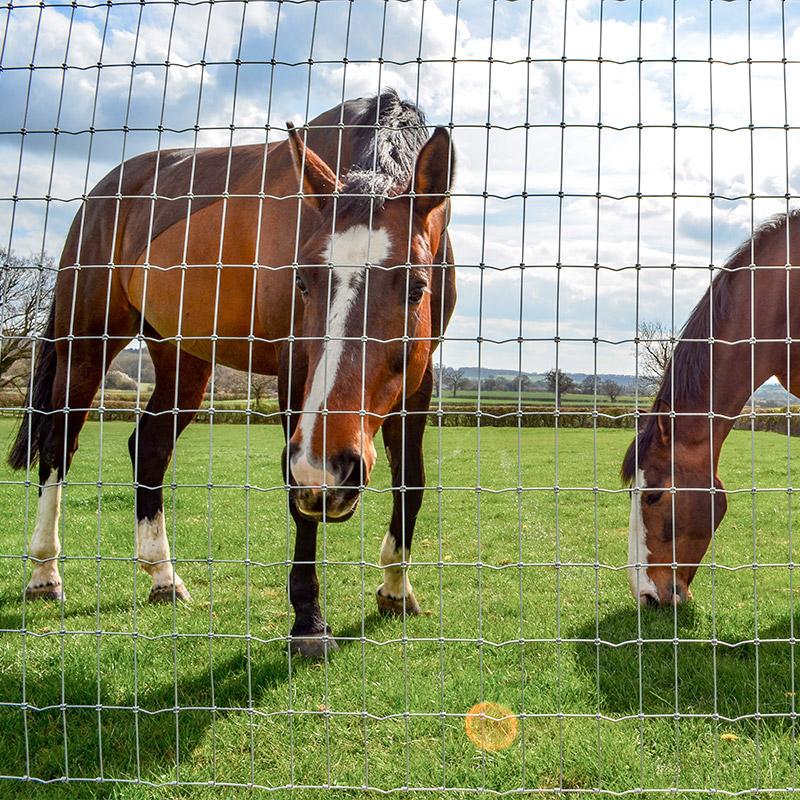 Horse_fencing_gallery_2