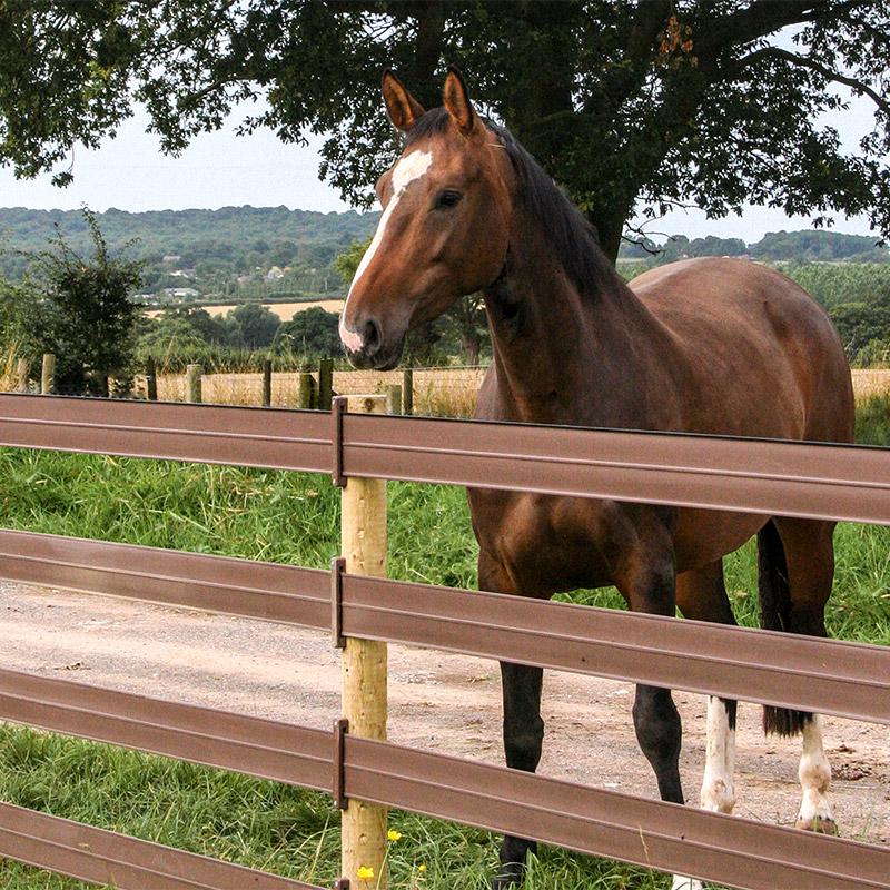 Horse behind centaur rail