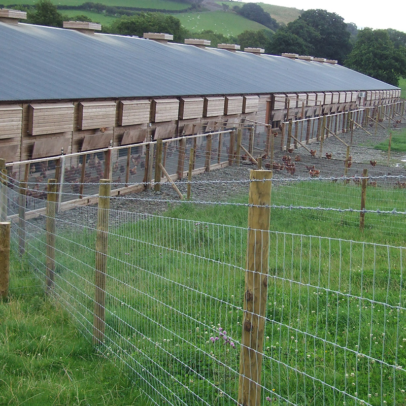 Poultry_fencing_gallery_3